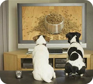 Media watching -- dogs with food on TV